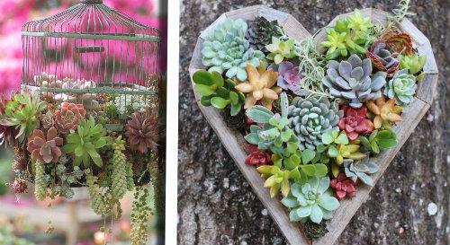 Ecco 20 Splendide Decorazioni Con Piante Grasse Semplici E Di Lunga
